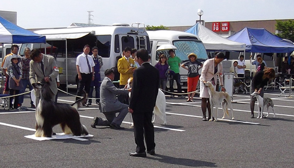 ドッグショー「宇都宮愛犬クラブ展」4