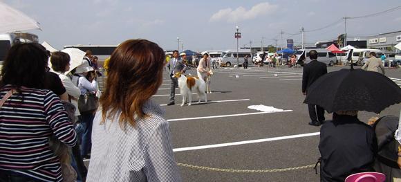 ドッグショー「宇都宮愛犬クラブ展」1