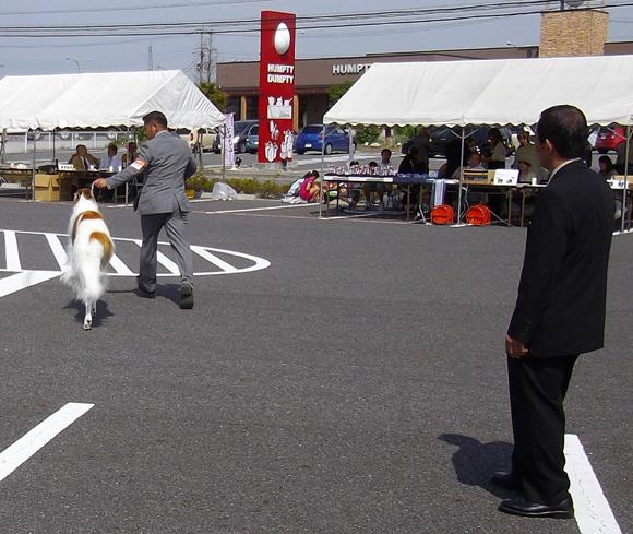 ドッグショー「宇都宮愛犬クラブ展」3