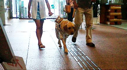 盲導犬と体験歩行。