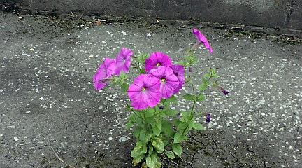 ど根性の花?