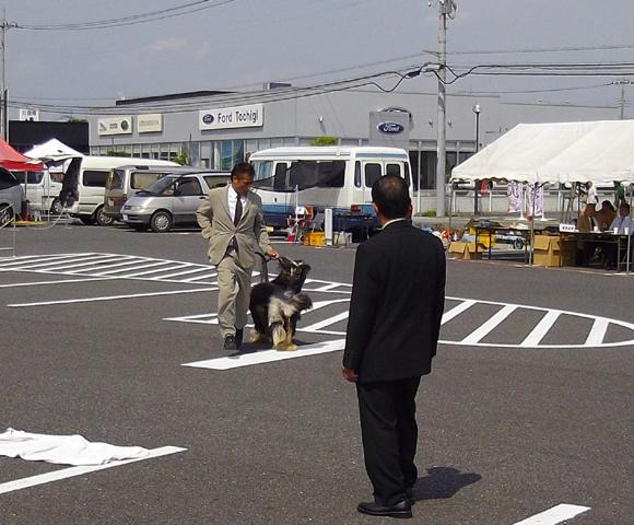 ドッグショー「宇都宮愛犬クラブ展」2