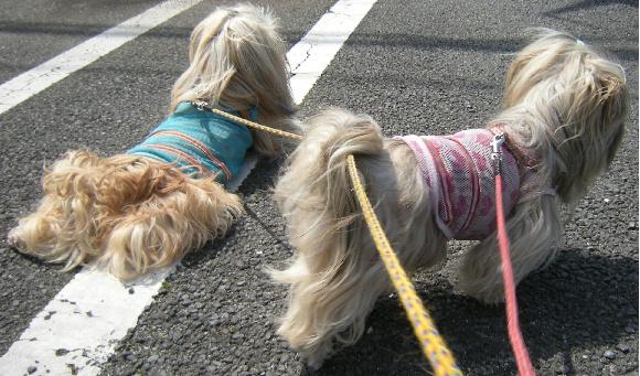 リリィさんの後足ビロ~ンとルビィさん