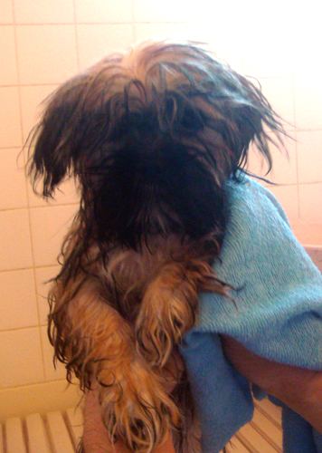 ルビィは初のお風呂で~す。
