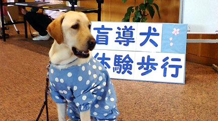 いらっしゃい、僕たち盲導犬と遊びましょう。