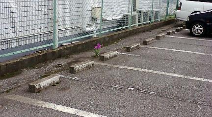 こんな所で元気に咲いてる、花!